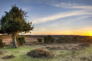 A Starburst of sunlight at Bratley View in the New Forest National Park in Hampshire